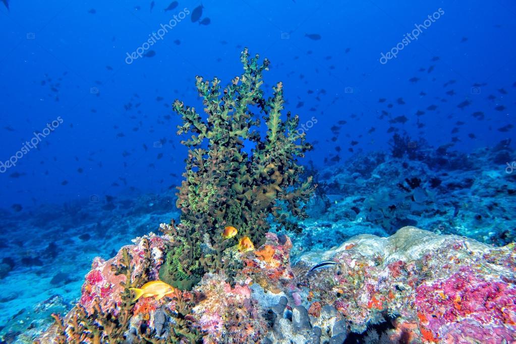 Мальдивы, кораллы и рыбы
