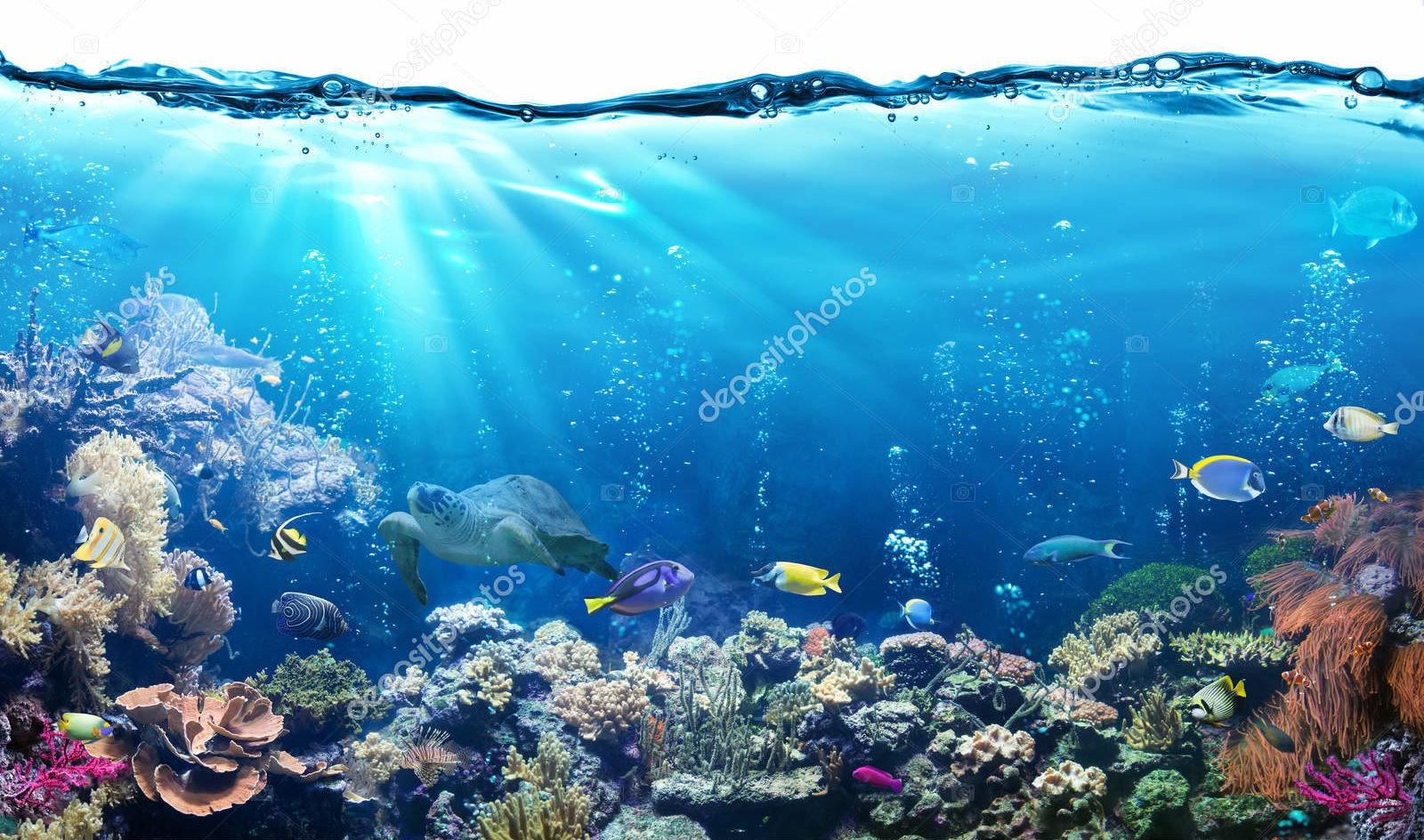 Подводные сцены с тропическими рыбами