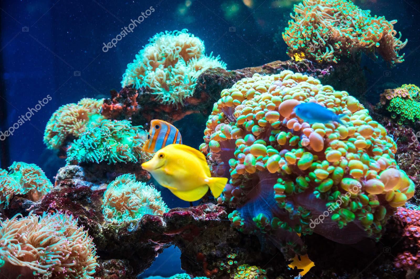 Тропические рыбы и кораллы
