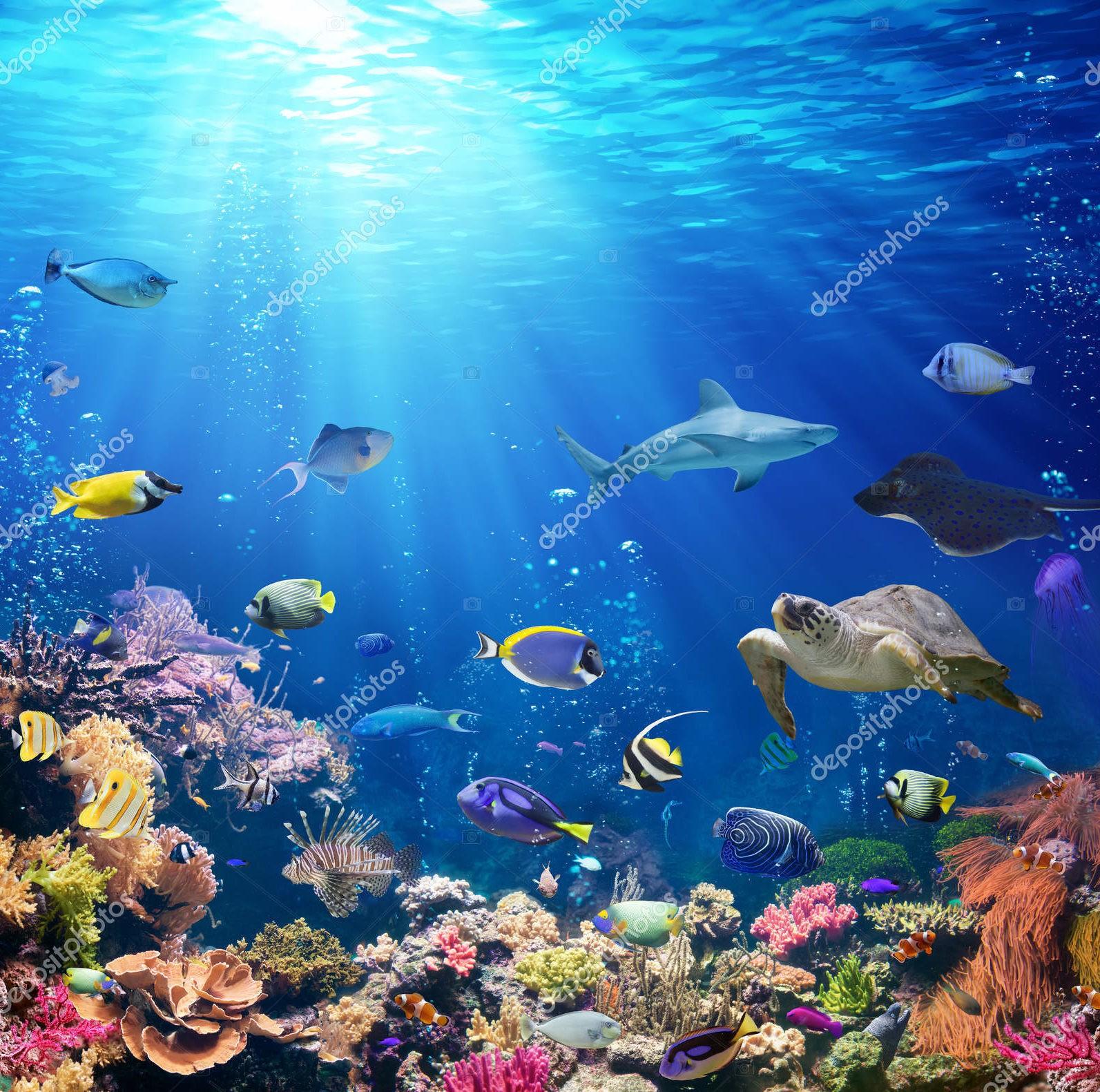 Коралловый риф и тропические рыбы