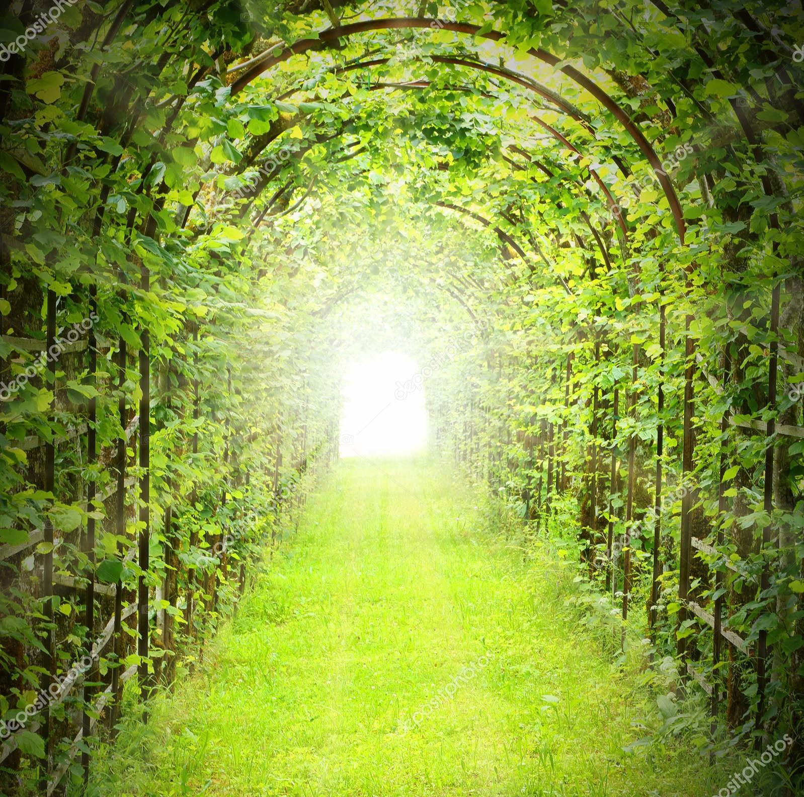 Зеленый тоннель с солнечными лучами