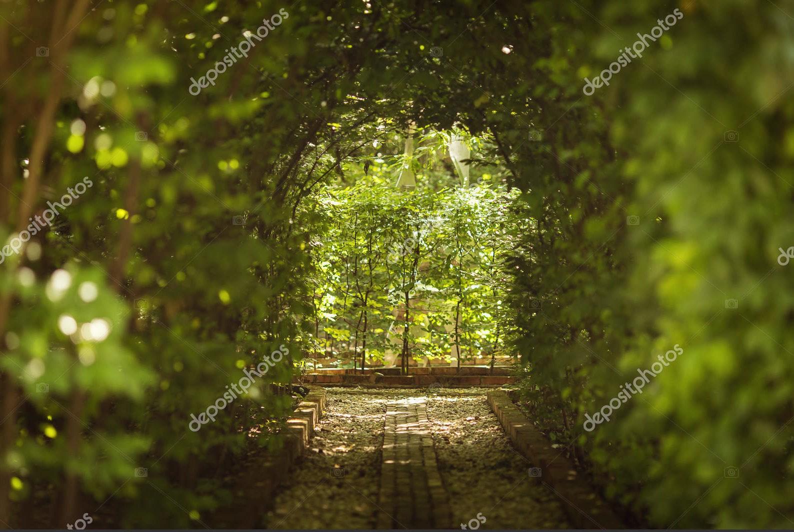 """Аллея """"Зелёный тоннель"""""""