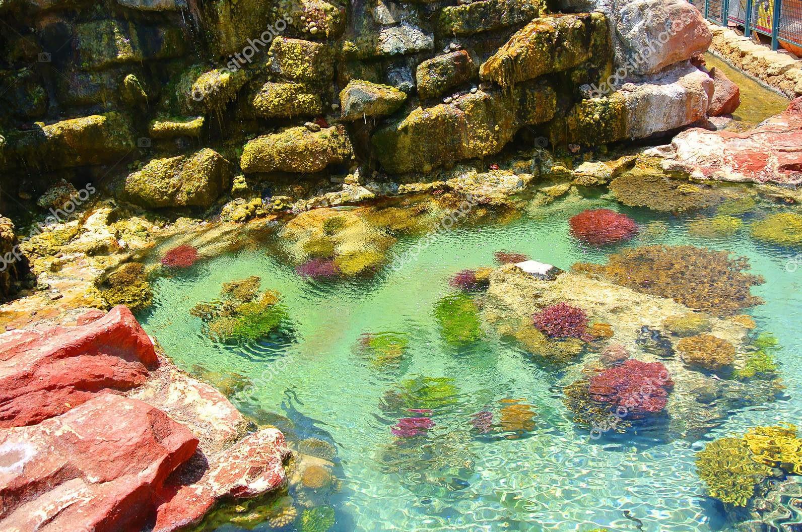 Яркие цвета кораллов, Эйлат