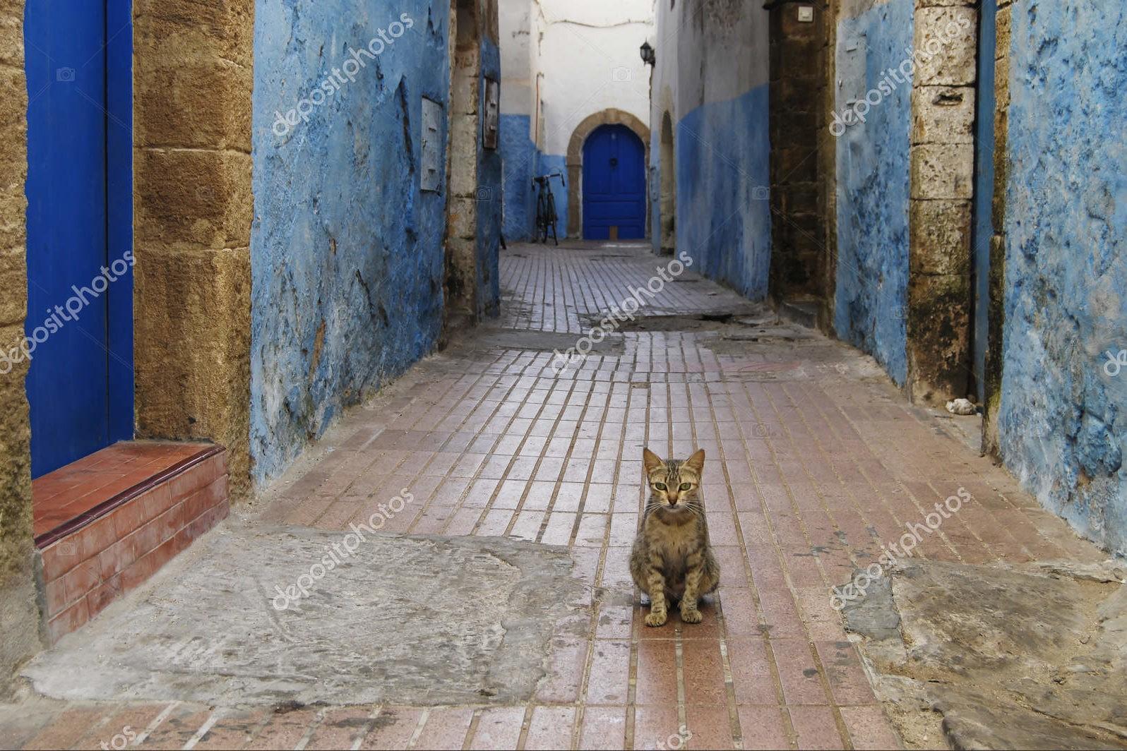 Кошки на улице Медина