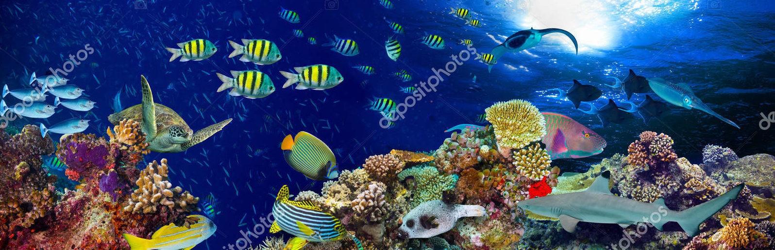 Разноцветные обитатели тропических вод