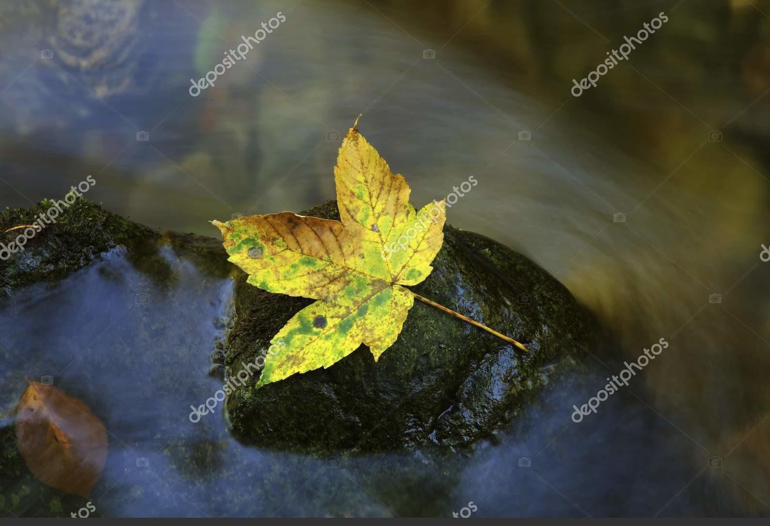 Осенние листья на скале
