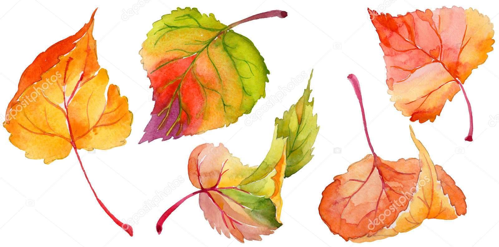 Осенние листья, эскиз, акварель