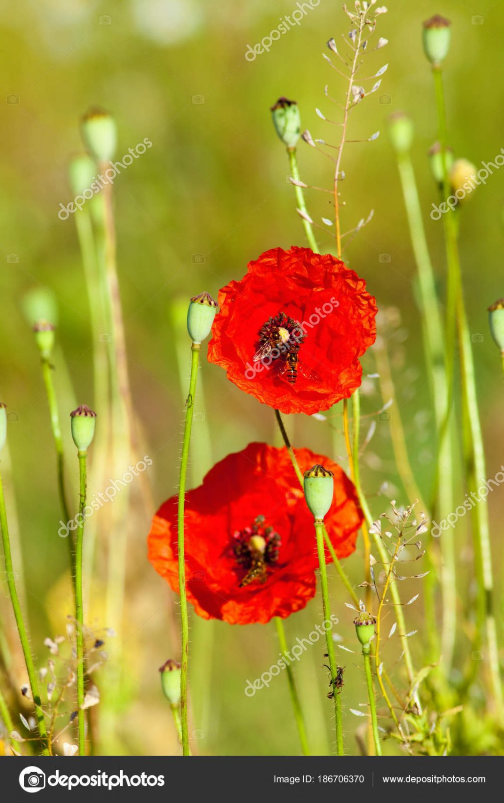 Дикие луговые цветы