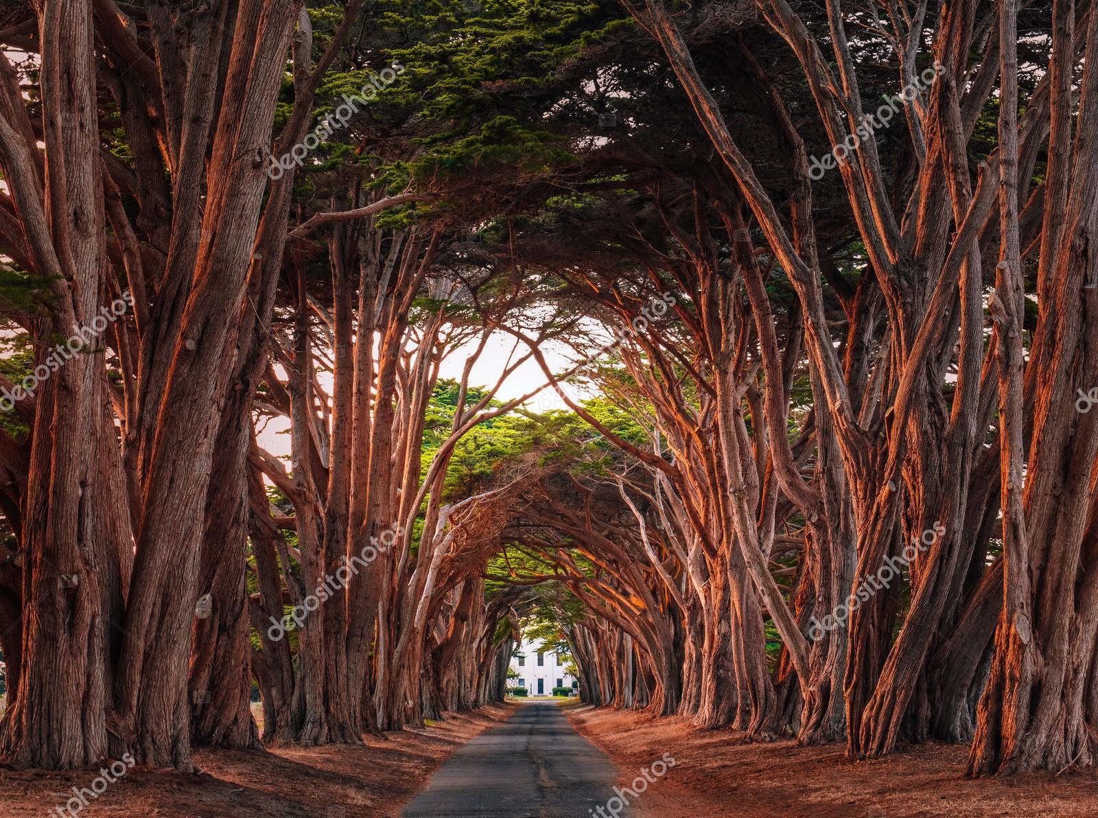 Кипарисовый тоннель, Калифорния