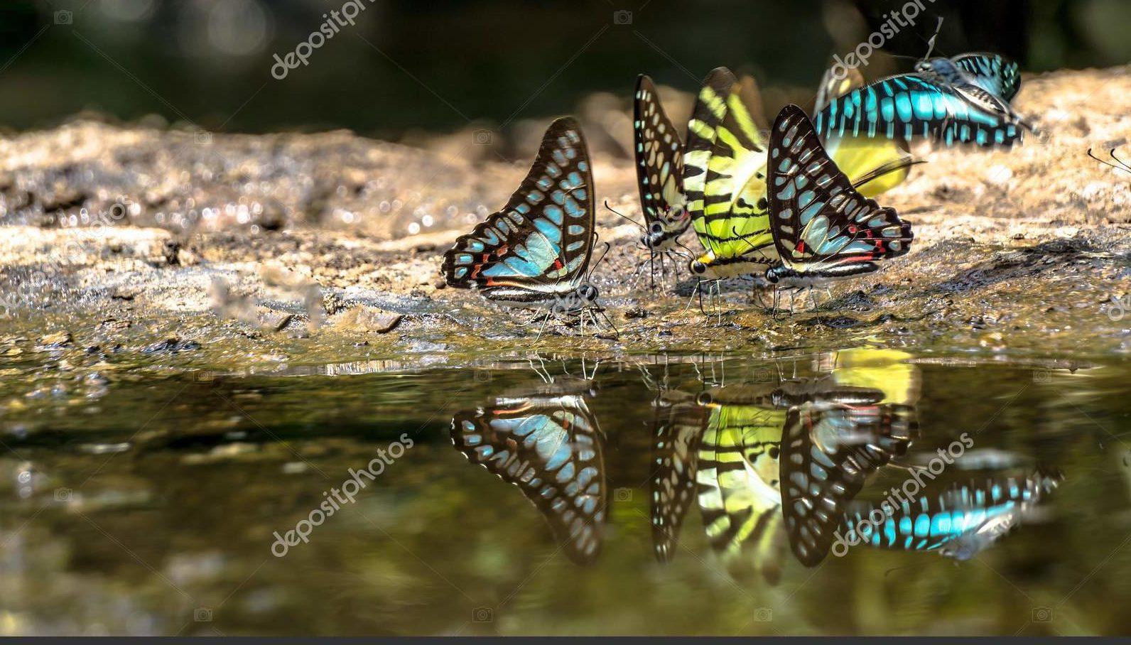 Бабочки в природе