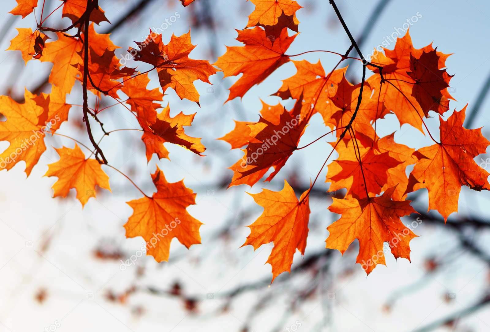 Кленовые листья на фоне неба