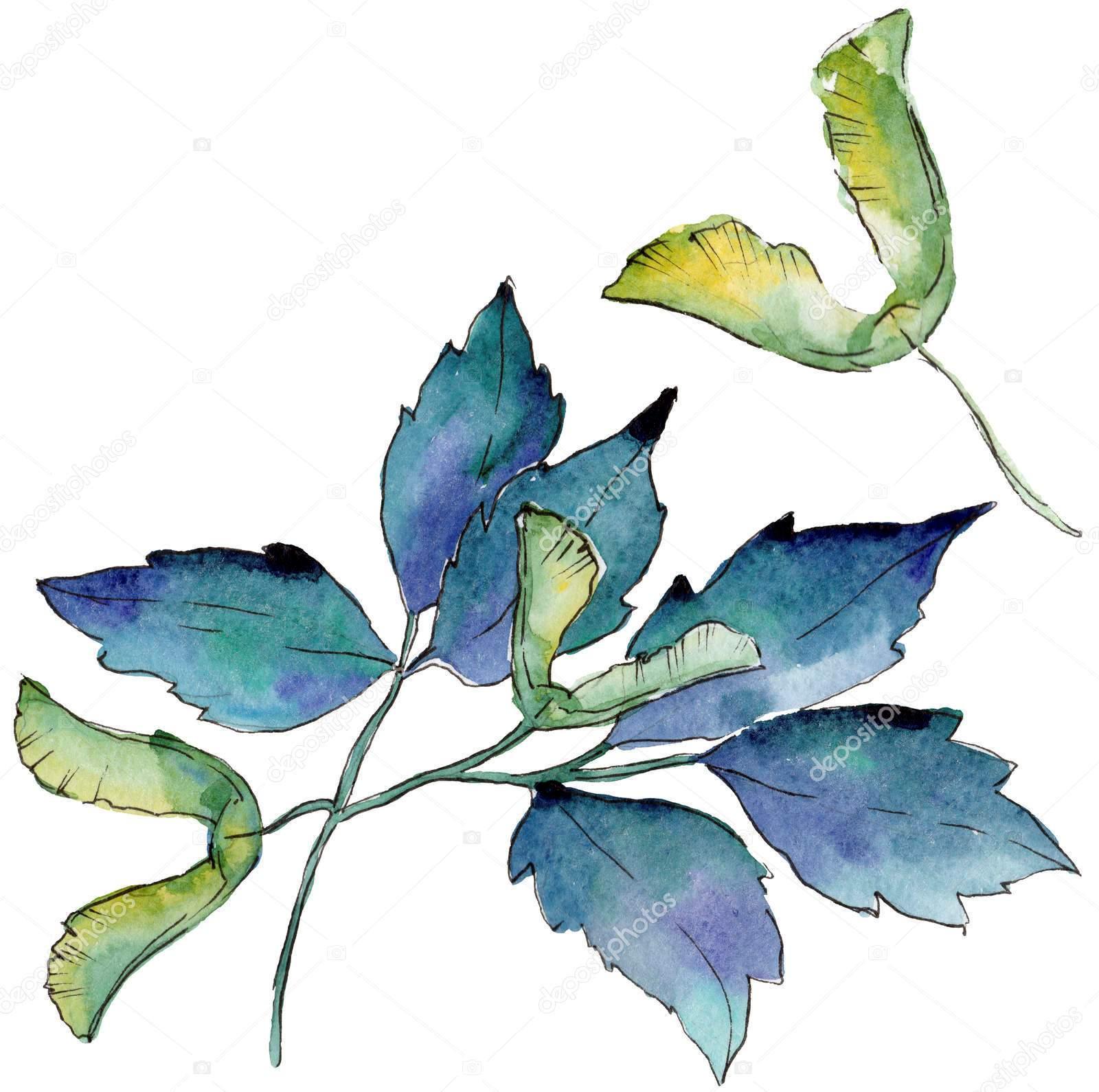 """""""Листья клёна"""", акварель"""