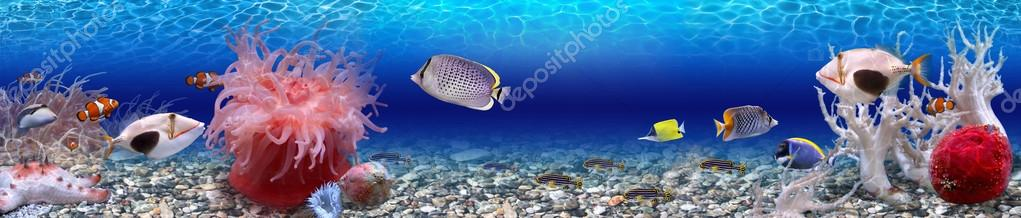Экзотические рыбы, панорама