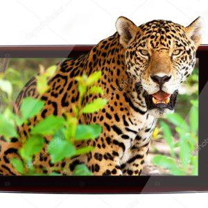 Леопард 3D