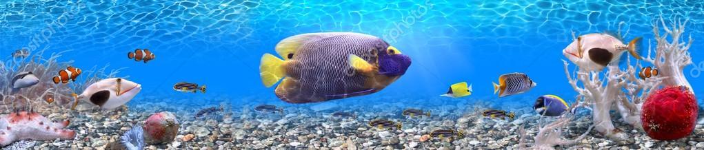 Подводный мир, панорамное изображение